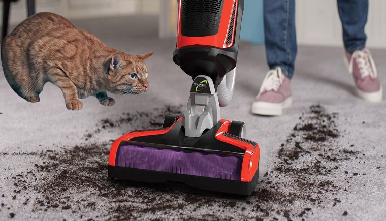 The 5 Best Vacuum for Cat Litter (Top Picks & Review in 2021)